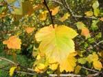 Золотая осень начинается