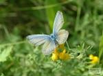Бабочка. - Фото: http://www.photosight.ru